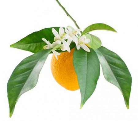Appelsinblomst